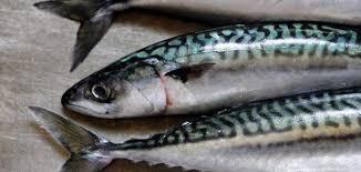 سمك الماكريل وفوائده